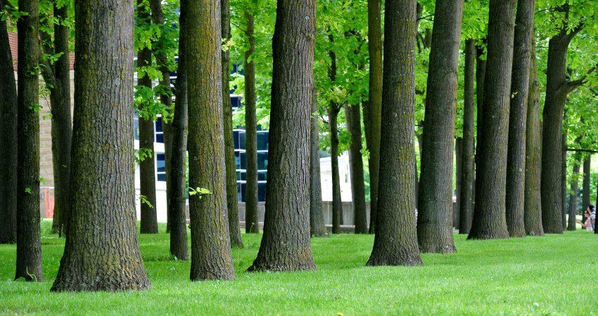 Bäume in Deggendorf müssen unter Schutz gestellt werden. Bild: RichardBH, Flickr