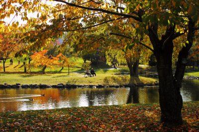 Aus dem Deggendorfer Stadtpark ließe sich mehr machen. Bild: MIKI Yoshihito, Flickr