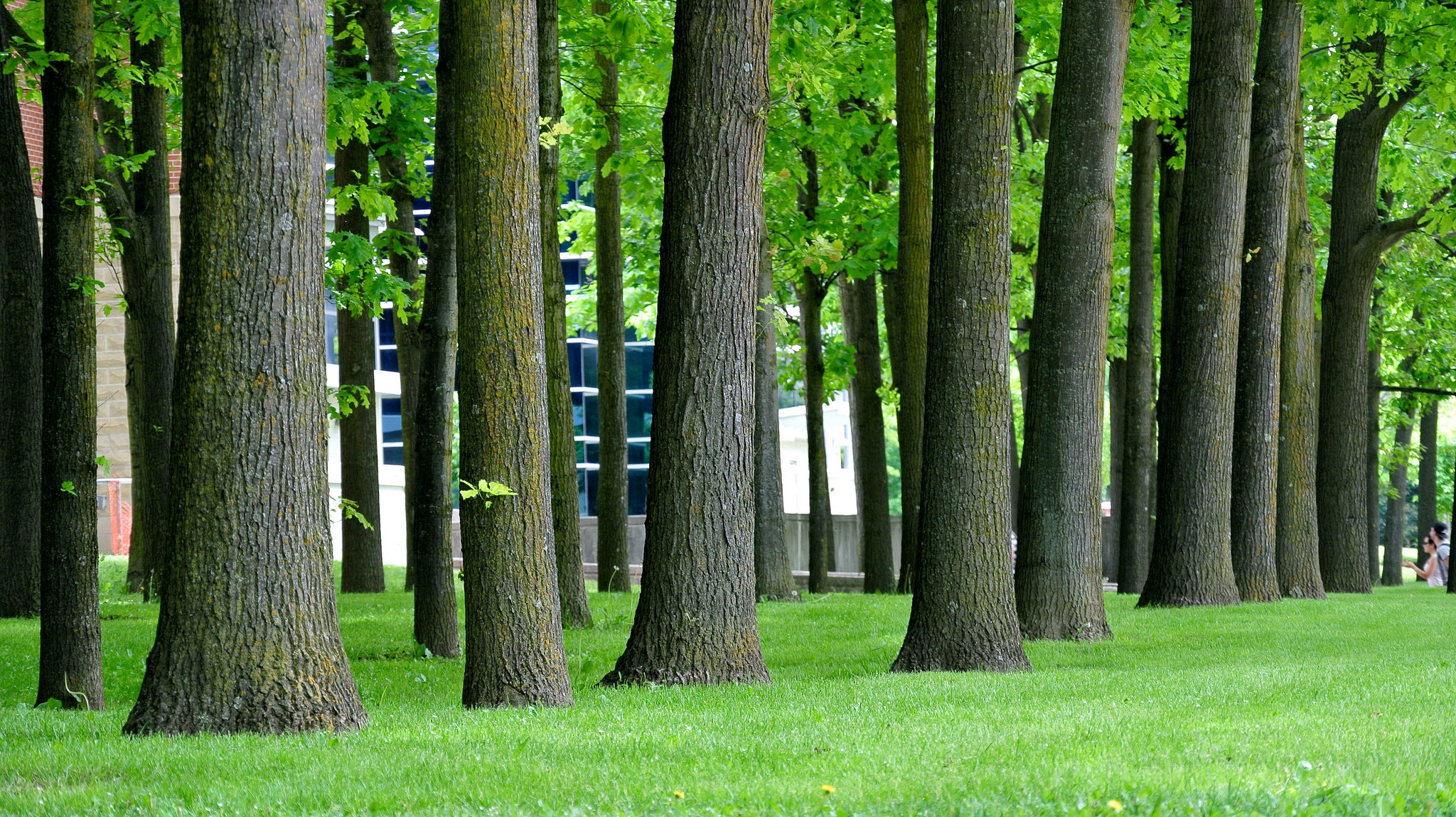 Antrag: Erlass einer Baumschutzverordnung