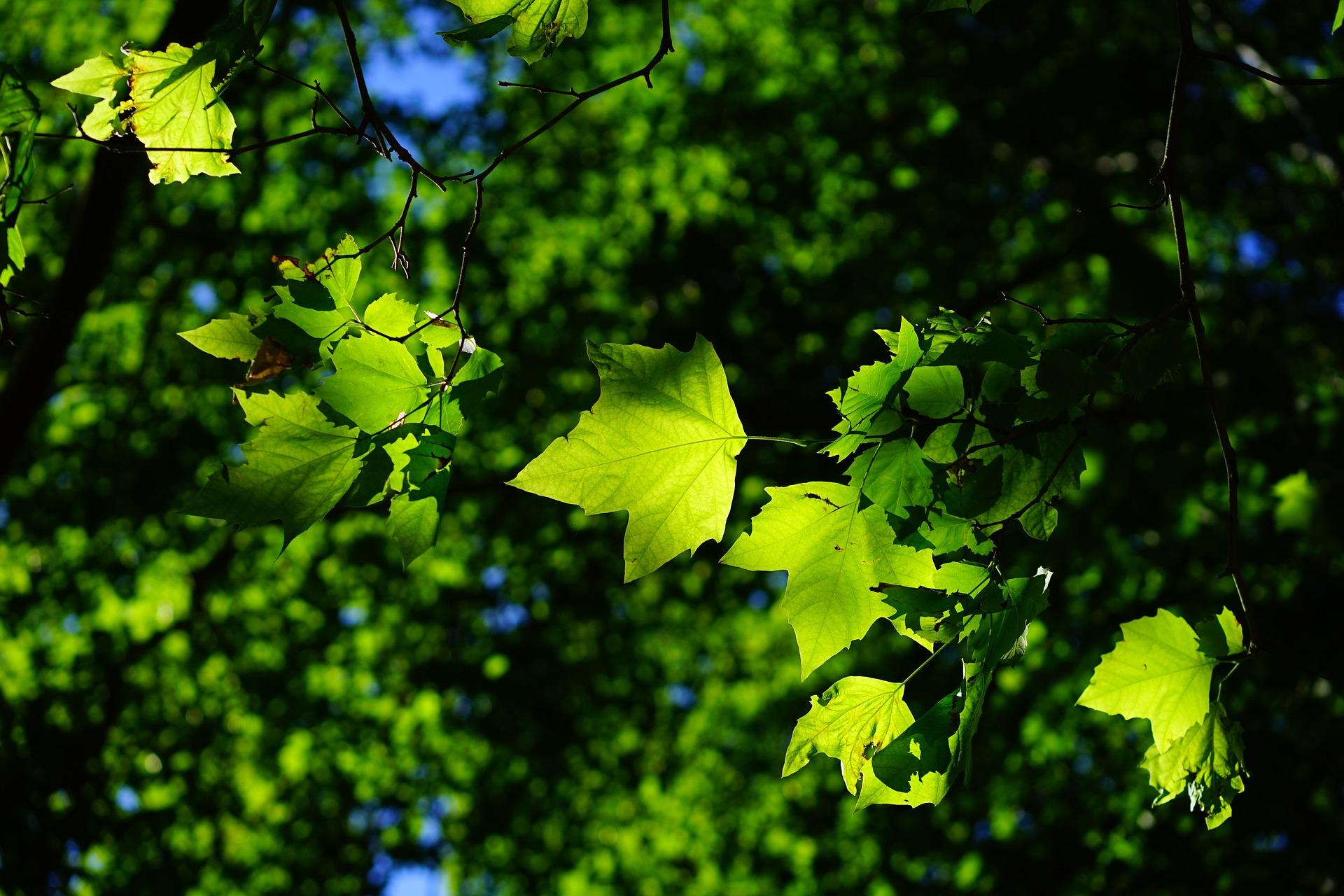 Anfrage im Stadtrat: Baumfällaktion Bogenbach/Stadtpark